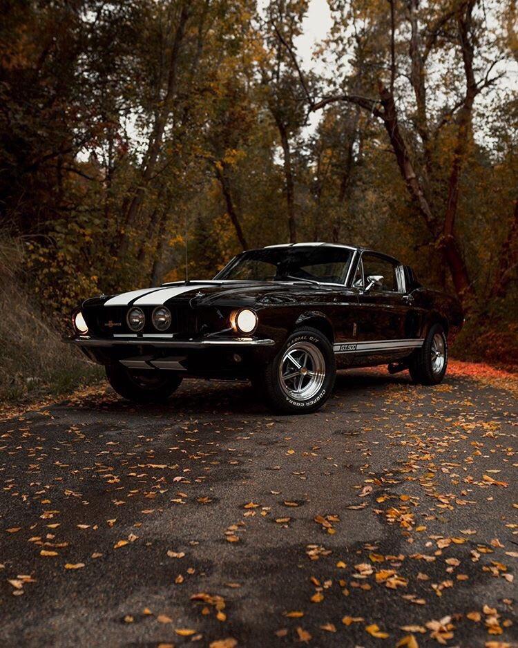 1967 Ford Mustang Fastback GT500 5.jpg