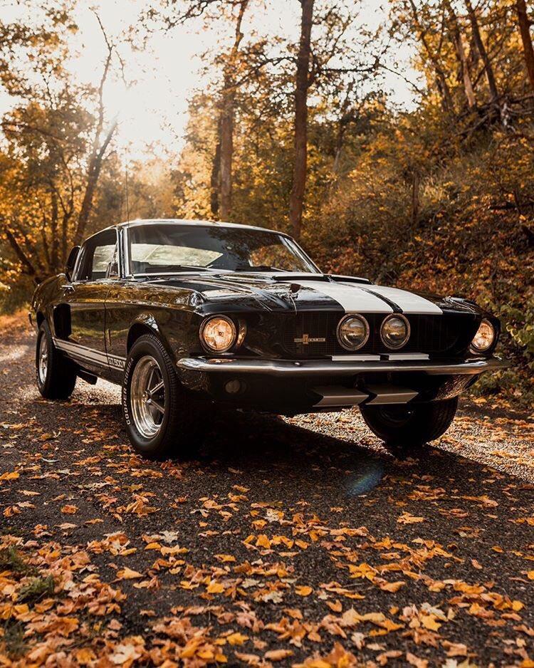 1967 Ford Mustang Fastback GT500 6.jpg