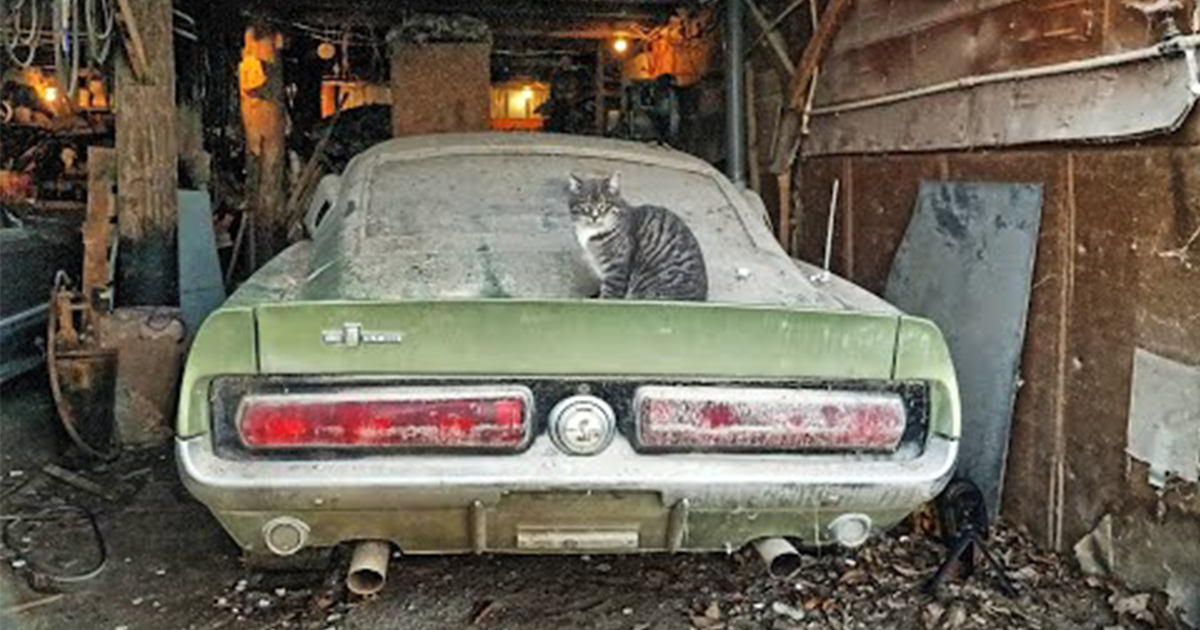 1967 Shelby GT500 Barn Find and Appraisal That Buyer Uses To Pay Widow - Price Revealed.jpg
