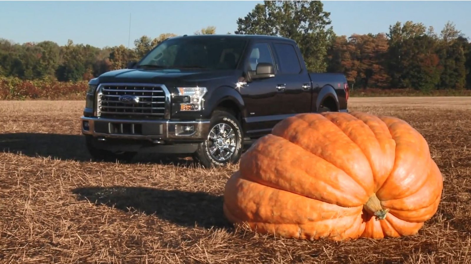 Ford F150 Hauling 1,200 Pound Giant Pumpkin 3.JPG